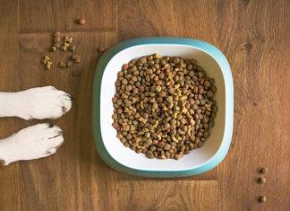 karmy dla psa