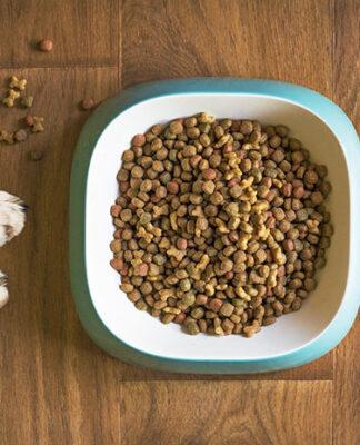 Przegląd karm leczniczych dla psów